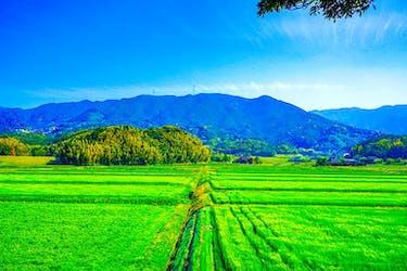 【田舎の土地を売りたい】売るための基礎とコツ|農地・山林はどう売る?