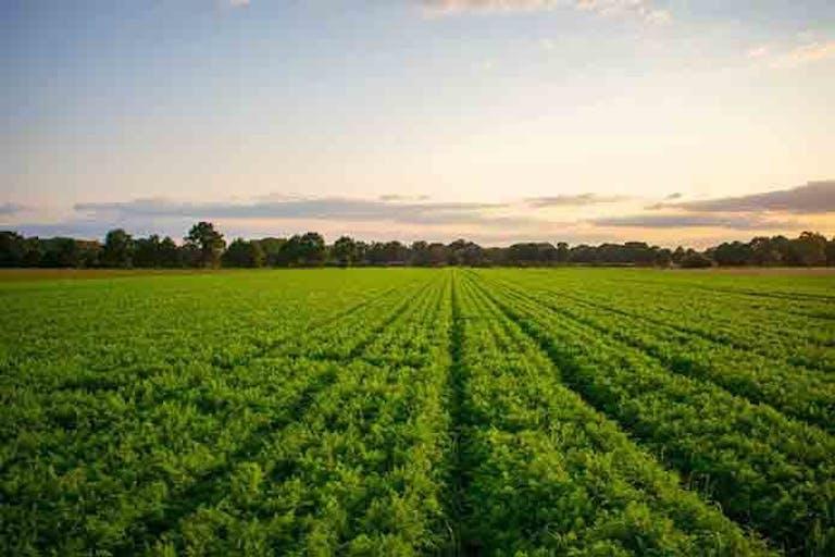 相続した土地の活用方法は?田舎の土地を放置するリスクを解説